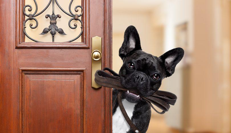 Hunden vil ut på luftetur